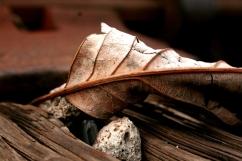 leaf size for frame