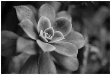 Plant close